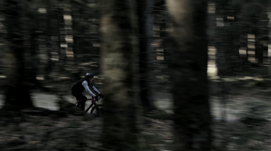 Bernard Hinault trees