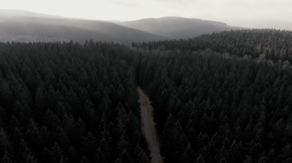 drone trees